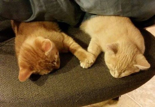 Kittens-Holding-Paws-While-Napping