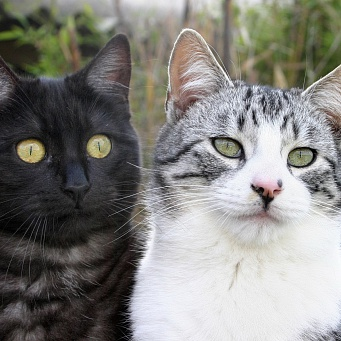 catsss (2)